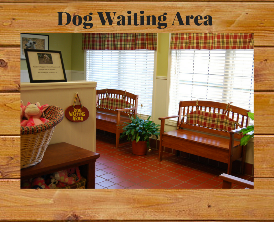 04 Dog Waiting Area
