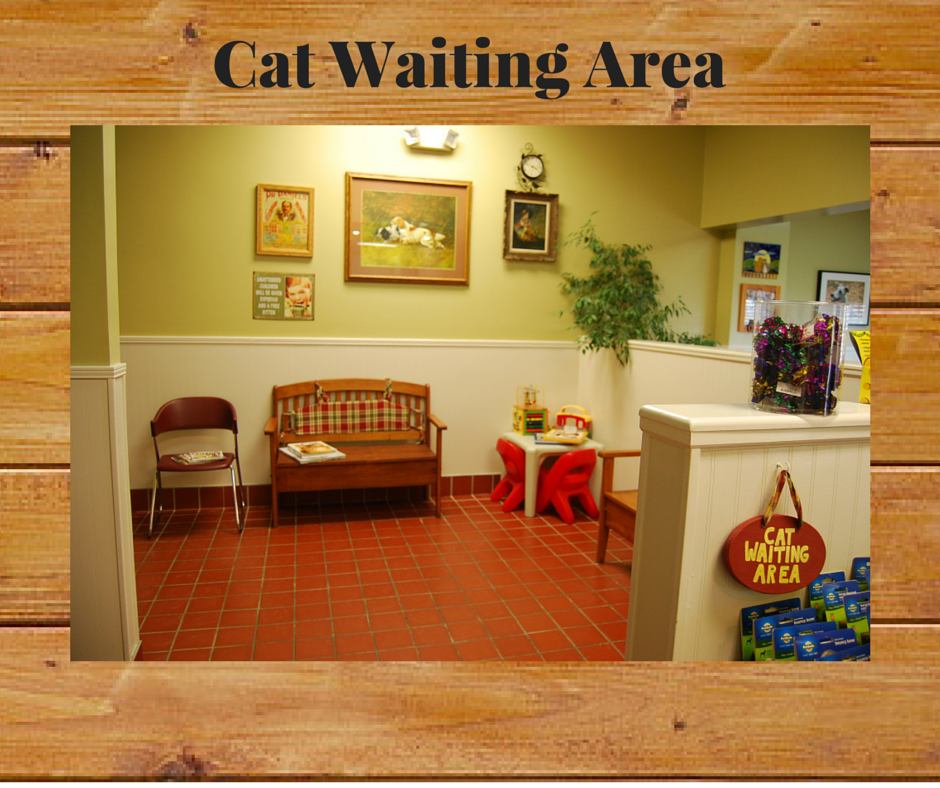 05 Cat Waiting Area