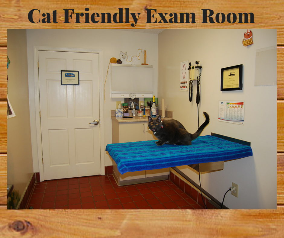 08 Cat Friendly Exam Room