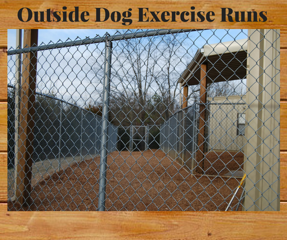 21 Outside exercise dog runs